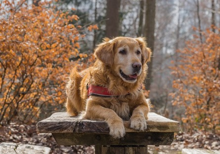 Old dogs can also benefit from dog parkour